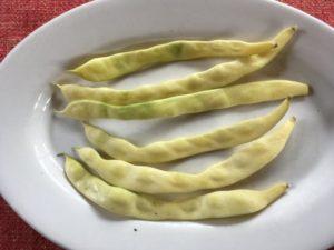 Meraviglia di Venezia bean by Martha Gottlieb