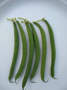 Montpelier filet bean by Anne Warner