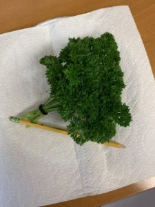 Moss Curled Parsley- from seed by Lois Miller