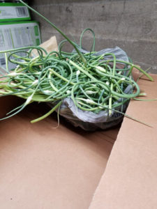 Oddities- Garlic Scapes by Valerie Jackson