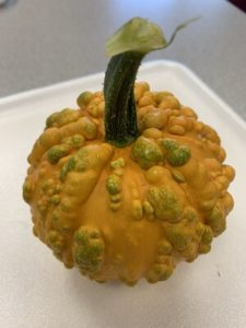 Ornamental Gourd by Troy Elementary School