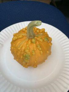 Ornamental Gourd by Walker Elementary School