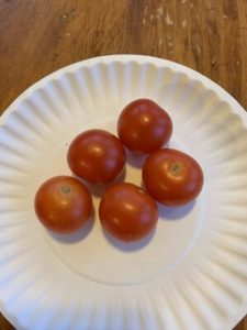 Peace Vine Cherry Tomatoes by Mount View Elementary School