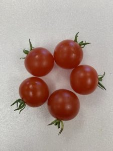 Peacevine Cherry Tomatoes by Troy Elementary School