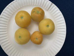 Peach Tomatoes by Walker Elementary School