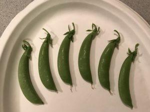 Peas, Sugar Snap by Matthew Dubois