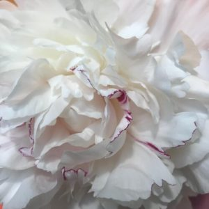 Peony by Roger Bisaillon
