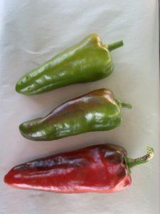Pepper Carmen by New Maple Master Gardener