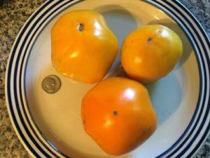 Persimmon tomato by Bridgette Bartlett