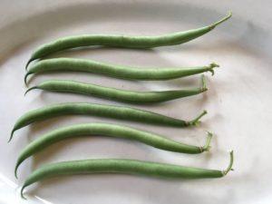 Petit Filet bean by Martha Gottlieb