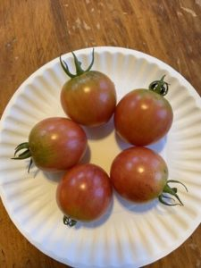 Pink Bumble Bee Tomatoes by Mount View Elementary School