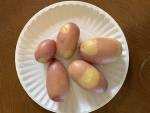 Pinto Gold Potatoes by Darcy Johnston