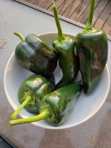 Poblano Peppers by Jason Eisenhuth