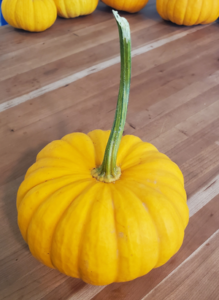 Pumpkin - Jack Be Little by Marsha and Michael Sloan