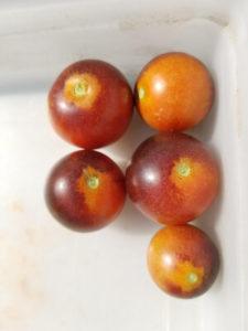 Purple Bumblebee cherry tomatoes by Valerie Jackson