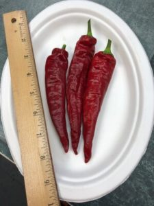 Red Rocket Paprika Peppers by Amy Frances LeBlanc