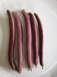 Red Swan filet bean by Anne Warner