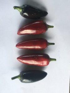 Czech Black Pepper by Rosey Guest