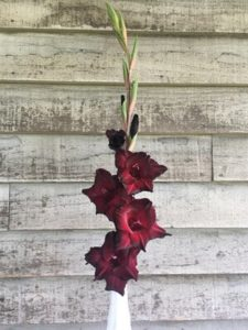 Single flower- Gladiolus - Black Sea by Rosey Guest