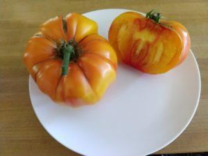 Striped German Tomato by David Frankel