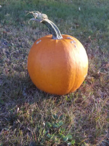 Sugar Pie Pumpkin by Valerie Jackson