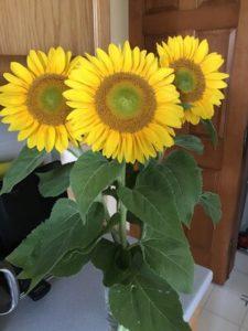 Sunflower, Green Heart by Matthew Dubois
