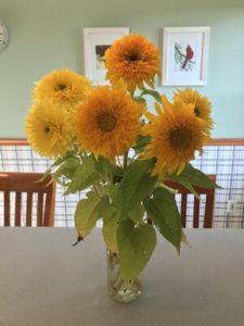 Sunflowers, Goldy Double (orange) and Lemonade (yellow) by Matthew Dubois