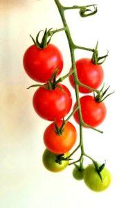 Sweet 100 Cherry Tomatoes by Vanessa Ishihara