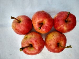 Sweet Sixteen early apple by Anne Warner