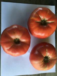 Tomato - Cracovic Yugoslav. (tomato I grew in honor of Janet Winslow) by Rosey Guest