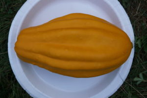Unknown Compost squash/gourd by Stephanie Oakes