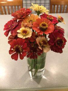 Zinnia, mixed bouquet 2 by Matthew Dubois