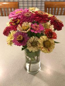 Zinnia, mixed bouquet 3 by Matthew Dubois