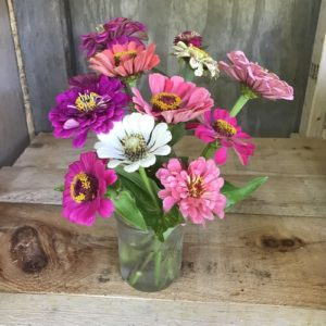 Zinnias in pink, mixed bouquet by Matthew Dubois