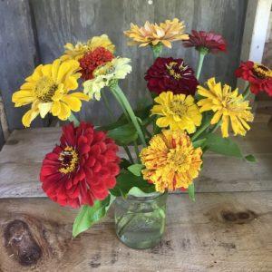 Zinnias in yellow, mixed bouquet by Matthew Dubois