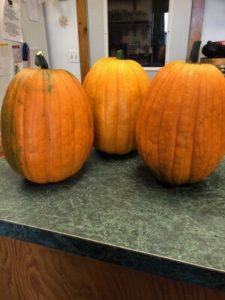 Compost special pumpkins by Amy Frances LeBlanc