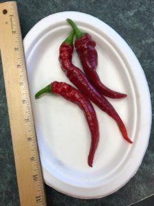 Jimmy Nardello's Italian Frying Pepper by Amy Frances LeBlanc