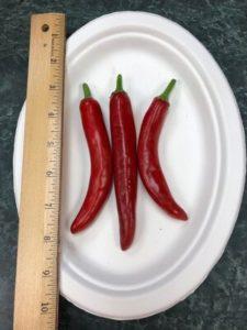 Lady Choi Korean chili, for gochukaro by Amy Frances LeBlanc