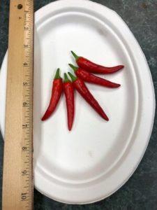 Matchbox Hot Peppers by Amy Frances LeBlanc