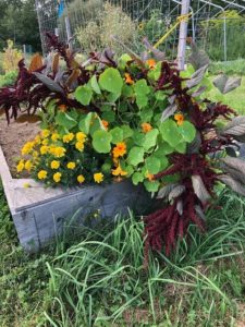 Natural Bouquet by Amy Frances LeBlanc