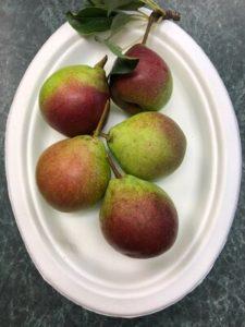 Seckel Pears by Amy Frances LeBlanc