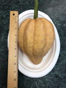 Thelma Sanders Sweet Potato Squash, heirloom by Amy Frances LeBlanc