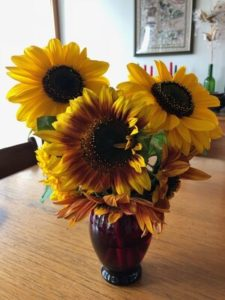 Volunteer Sunflowers by Amy Frances LeBlanc