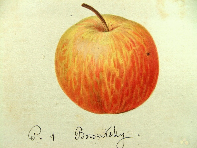 08 Borovitsky
