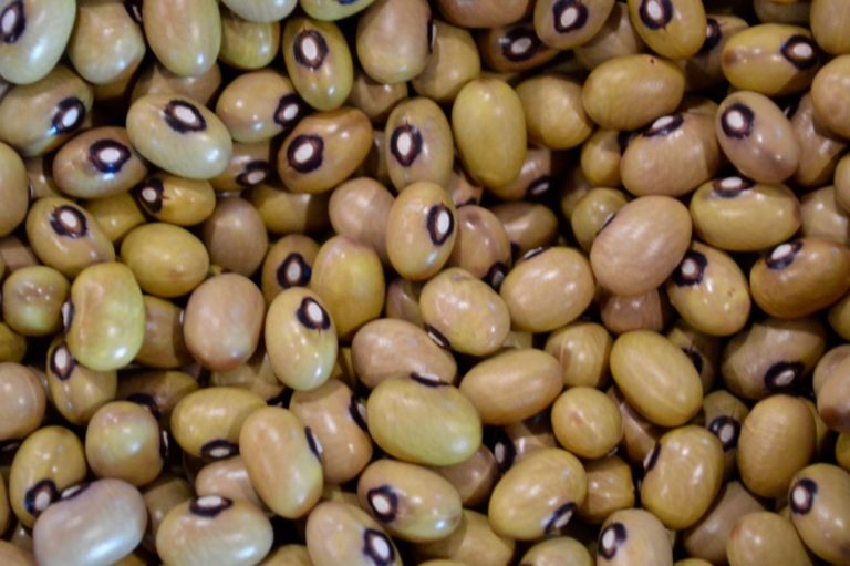 Beans at Seed Swap