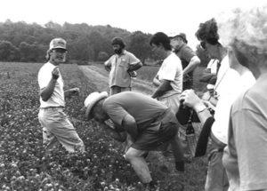 Farmers gather for USDA field walk