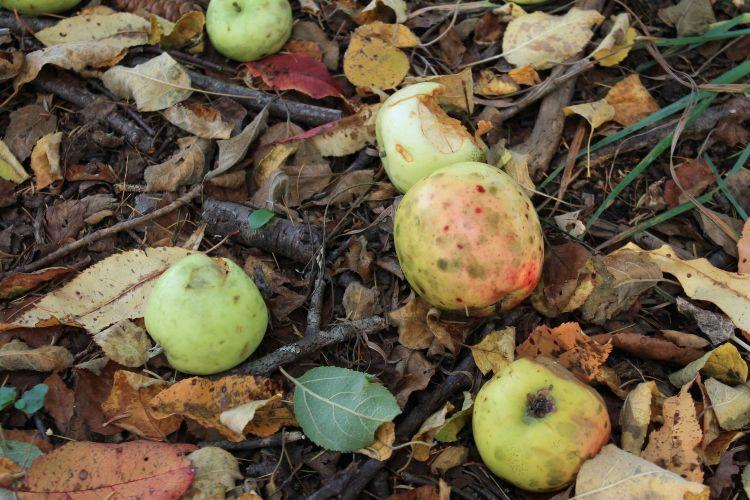 Grasslingsfruit