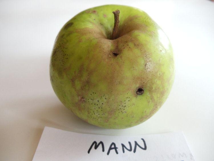 MannWesternMass.2