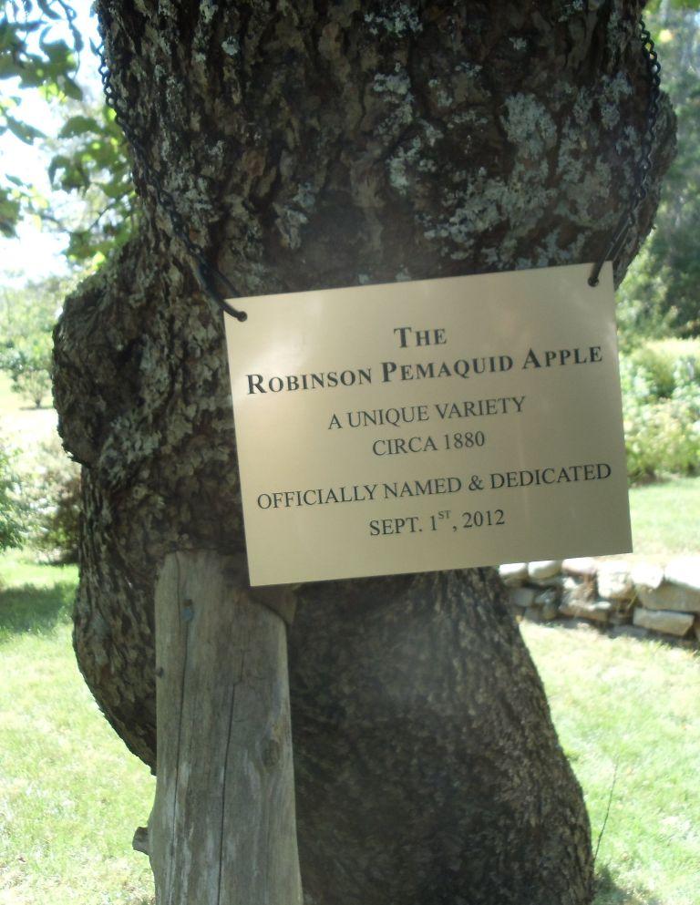 RobinsonPemaquid14