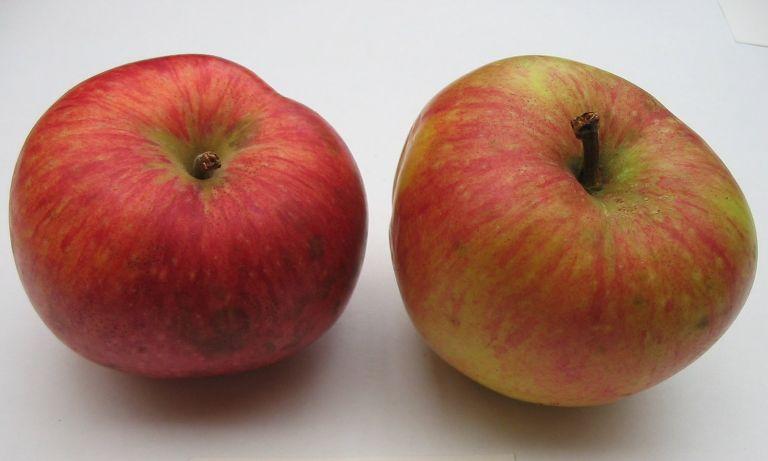 Somerset+of+Maine+2+fruit